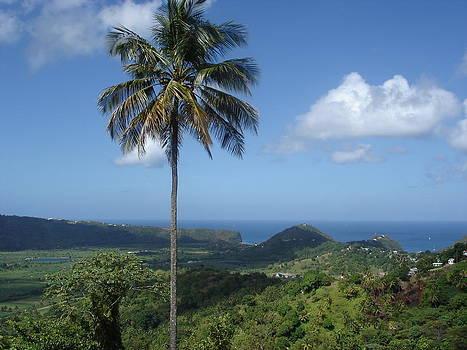 St. Lucia Palm by Kelli Uysaloglu