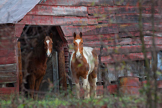 Stable Brothers by Donna Vasquez