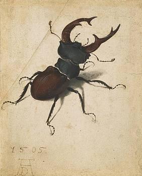 Albrecht Durer - Stag Beetle