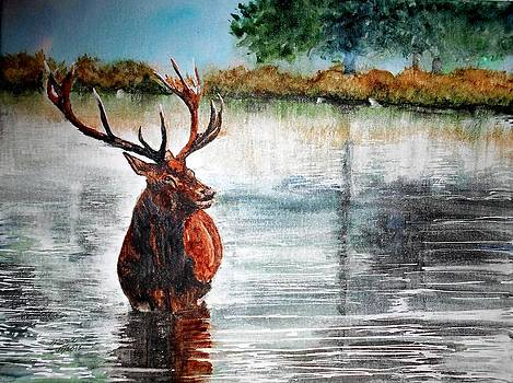 Stag in the Pond by Maris Sherwood
