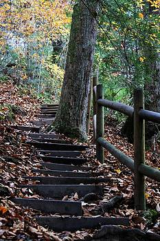 Stairs in the forest by Alina Skye