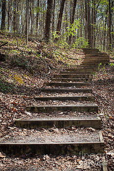 Stairway In The Forest by Todd Blanchard