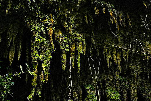 Sandra Pena de Ortiz - Stalactites At The Entrance To Las Cuevas De Camuy