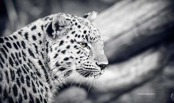Stalking prey by Stwayne Keubrick
