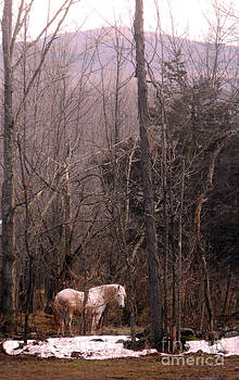 Stallion in The Mountain Pasture by Patricia Keller