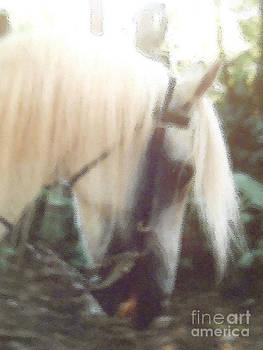 Stallion by Patricia Keller