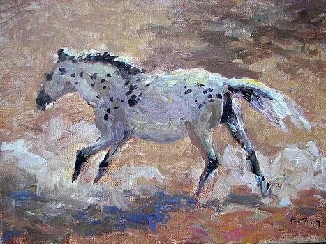 Stallion by Robert Stump