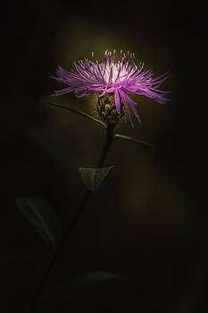 Stand Tall by Paul Barson