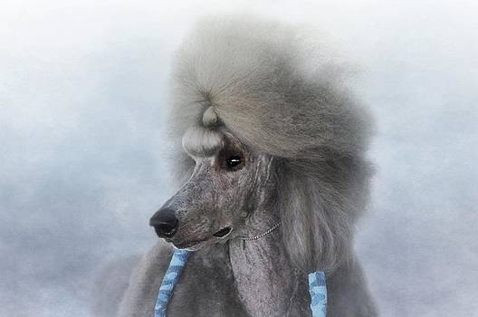 Standard Poodle Chrome by Stephanie Calhoun