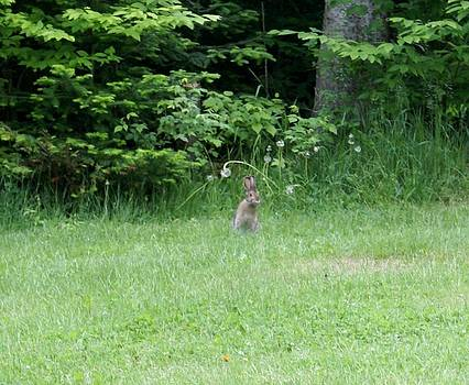Standing Brown Bunny by Jamie Williams