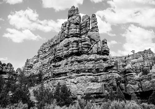 Standing Tall in Black and White by Denise Bird