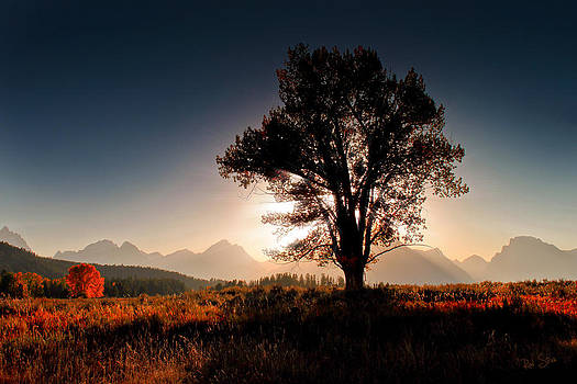 Standing Tall by Rod Stroh