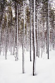 Robert VanDerWal - Standing Up to a Snow Storm
