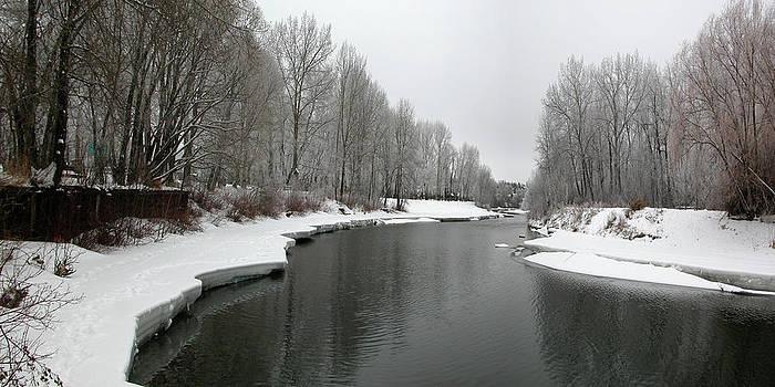 Stuart Turnbull - Stanley Park - winter 11