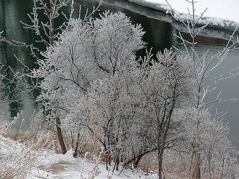 Stuart Turnbull - Stanley Park - winter 14