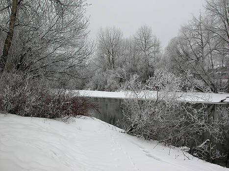 Stuart Turnbull - Stanley Park - Winter 18