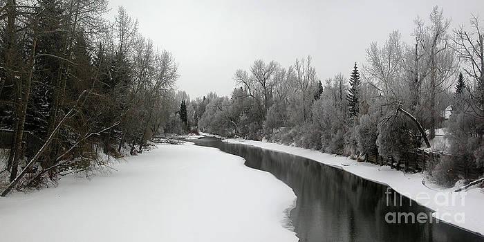 Stuart Turnbull - Stanley Park - winter 4