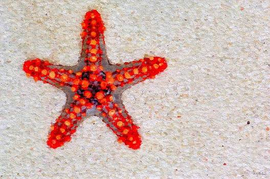 Star Bright - Red Knobbed Starfish by Sandy MacGowan