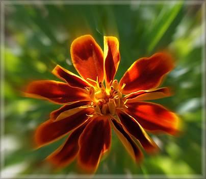 Rosemarie E Seppala - Star Bright Starlight Marigold