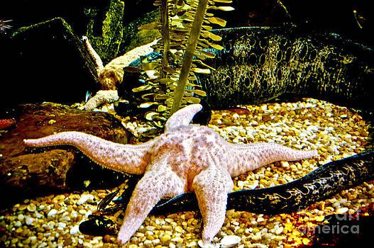 Star Fish by Fred L Gardner