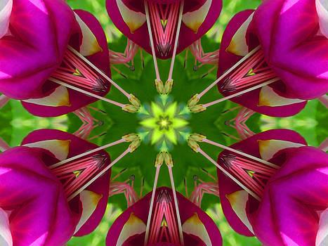 Star Fuchsia 1 Mandala by Diane Lynn Hix