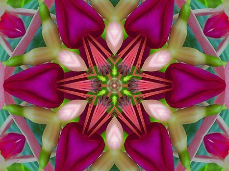Star Fuchsia 2 Mandala by Diane Lynn Hix