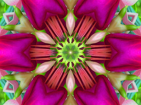 Star Fuchsia 3 Mandala by Diane Lynn Hix