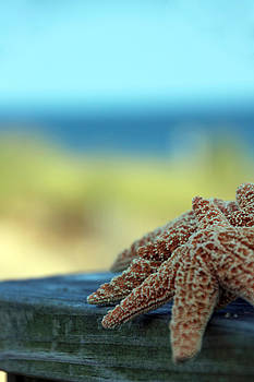 Carolyn Stagger Cokley - Starfish 3247
