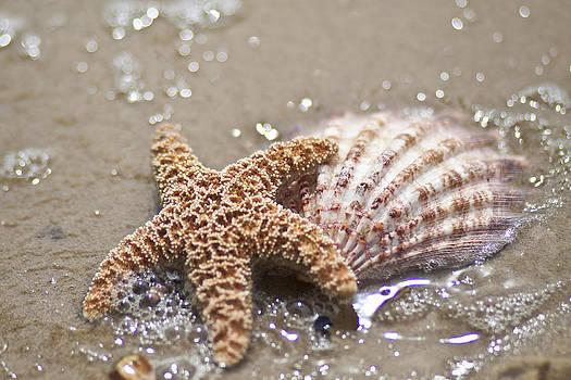 Regina  Williams  - Starfish and shell