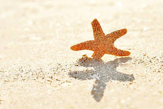 Art Block Collections - Starfish