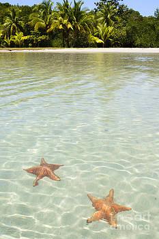 Oscar Gutierrez - Starfish Beach