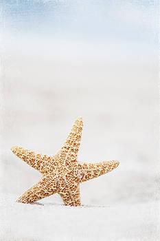 Carolyn Cochrane - Starfish