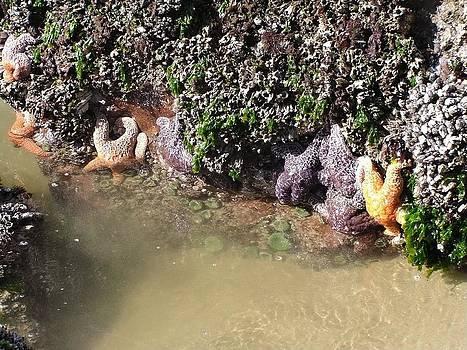 Starfish by Gary Rathjen