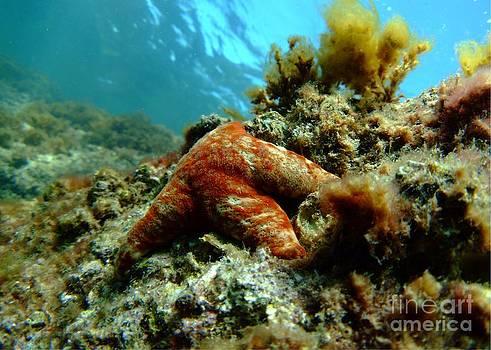 Starfish pretty background by Crystal Beckmann