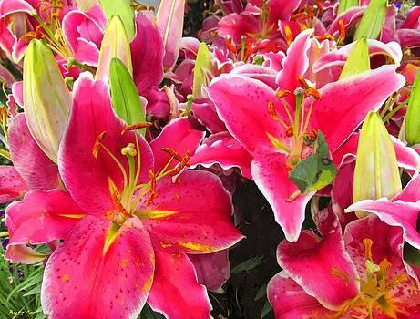 Buzz Coe - Stargazer Lilies