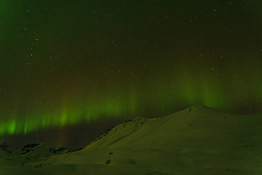 Starry Aurora by Emily Henriques