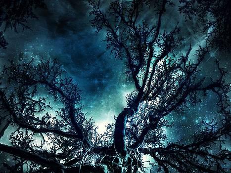 Starry Night by Deborah Knolle
