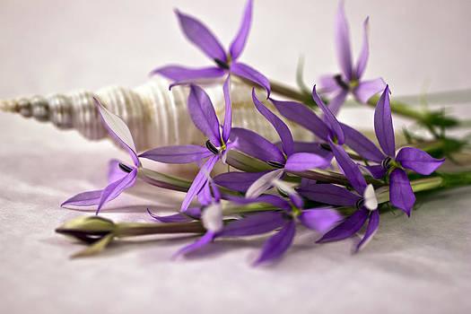 Sandra Foster - Starshine Laurentia Flowers And White Shell