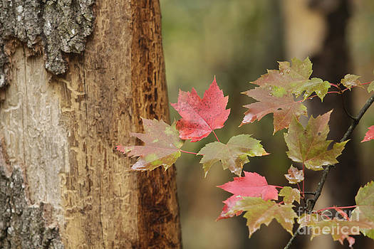 Start of Fall by Kathy DesJardins