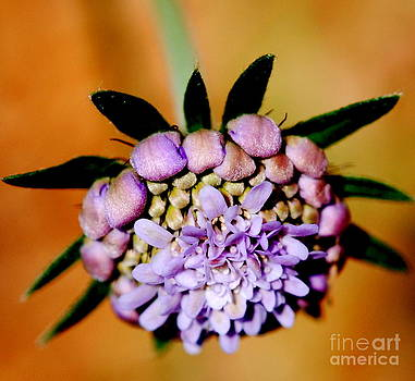 Starting To Bloom by Christy Phillips