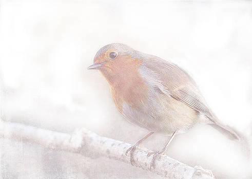 Stay little cheerful Robin by Sarah Vernon