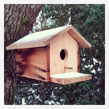 Stay Warm, Birdies! by Melissa Payne