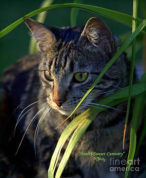 Patrick Witz - Stealth Sunset Curiosity