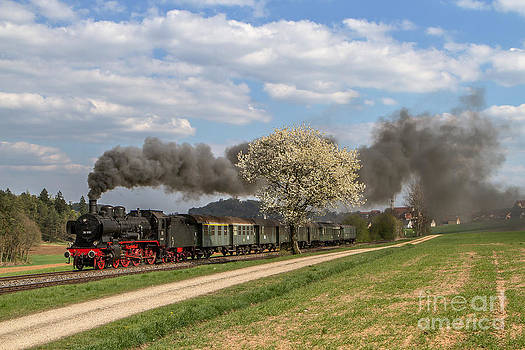 Steam train at flowering tree by Christian Spiller