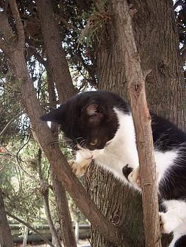 Rick Todaro - Step One  Climb The Tree