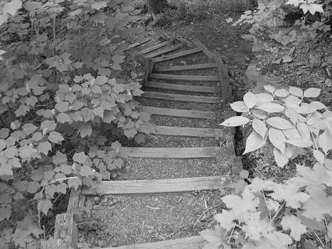 Steps in the woods by Mark C Ettinger