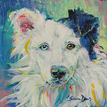 Stevie the Wonder Dog by Susan Davies
