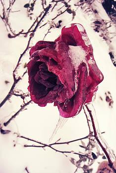 Still beautiful... by Victoria  Kostova