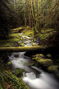 Still Creek by Rod Stroh