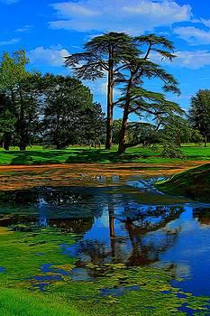 Still Lake by Ron Harpham
